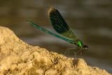 Libellen en insecten