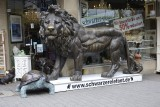 A lion in the schwarzer elefant!!