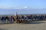 Show with Horses (great and very small)