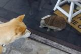 Zita and the Hedgehog (Aalst)