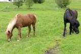 20130616-07-Horses.JPG