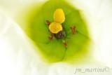 bees_life