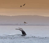 Whale Watching 2014