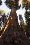 Sequoia_8539.jpg