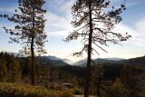 Sequoia_8542.jpg