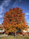 Mountain Ash Autumn Magic