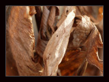 dried flowres