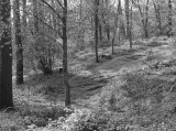 woods bw.jpg
