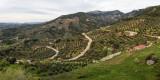 Hornos, olivos