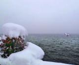 Winter swans...