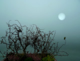 The fog veiled the lake and...