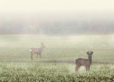 Look, look the roe deer! Take out the camera, quick!