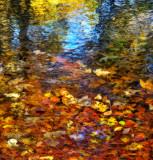 Autumn pond...