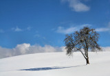 The proud solitude of a tree...
