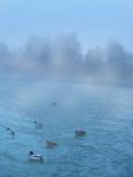 Having a good, misty swim...