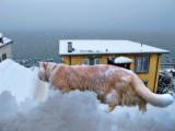 Snowcat...