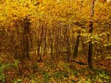 Autumn maze...