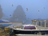 Misty port