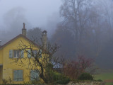 The fog comes,on little cat feet.....