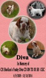 Diva  Left us For the Rainbow Bridge 12/10/14