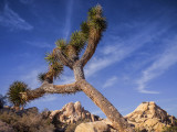 Joshua Tree NP Revisited 2015