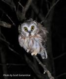 Whigg Meadow Bird Banding, Sept 2013