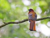 VIETNAM: Birds