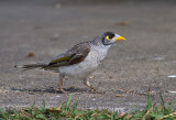 AUSTRALIA: Birds