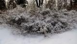 buisson de neige