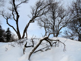 arbres entremêlés