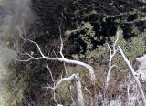 Plongeon sur branches