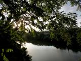 Le Tarn sous les arbres