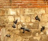 Pigeons battle