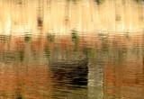 reflets sur le Tarn
