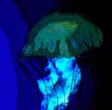 méduse ou champignon