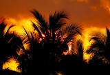 feu sur palmiers
