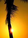 à l'ombre du palmier