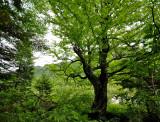 L'arbre au tronc noir