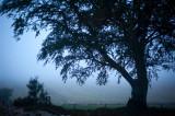 16th September 2014  blue mist