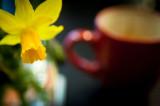 3rd April 2015  mini daffodil