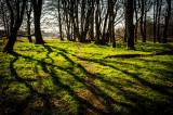 10th April 2015  spring shadows