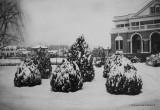 ECU Library  in Snow in 1936