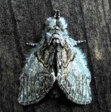 Early Moth Photos