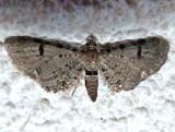 7586.-1, Eupithecia absinthiata, Wormwood Pug