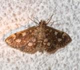 4953, Anania coronata