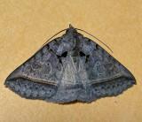 8747, Celiptera frustulum, Black Bit Moth