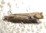 5383.97,  Neodactria sp., Unidentified Neodactria