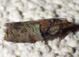 Cumulative Moths to date starting 2012