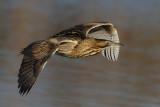 Birds Western Palaearctic