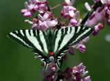 Butterflies (2005 - Present)